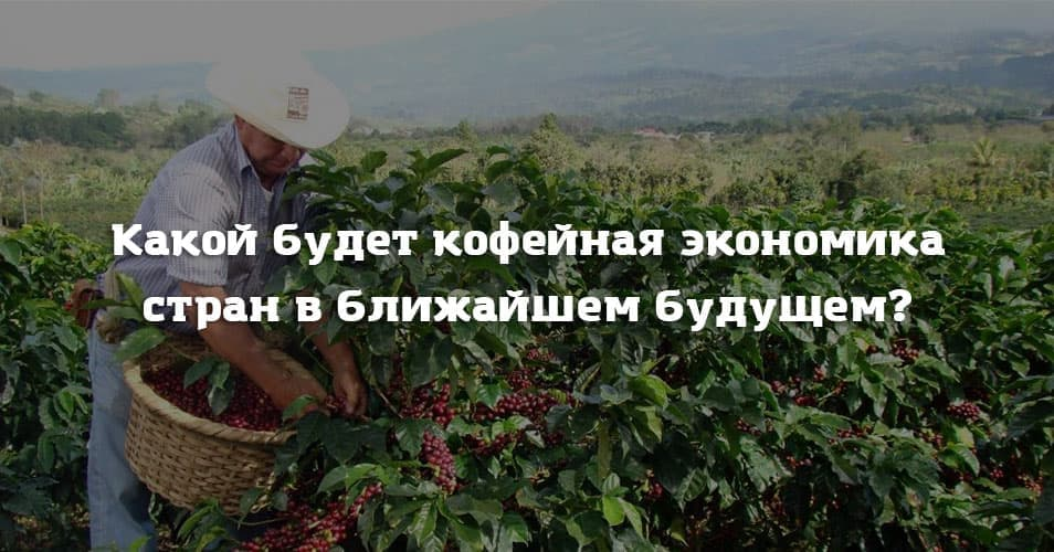 Какой будет кофейная экономика стран в ближайшем будущем?